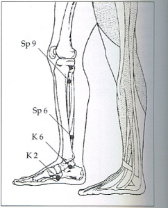 lower-leg-and-foot