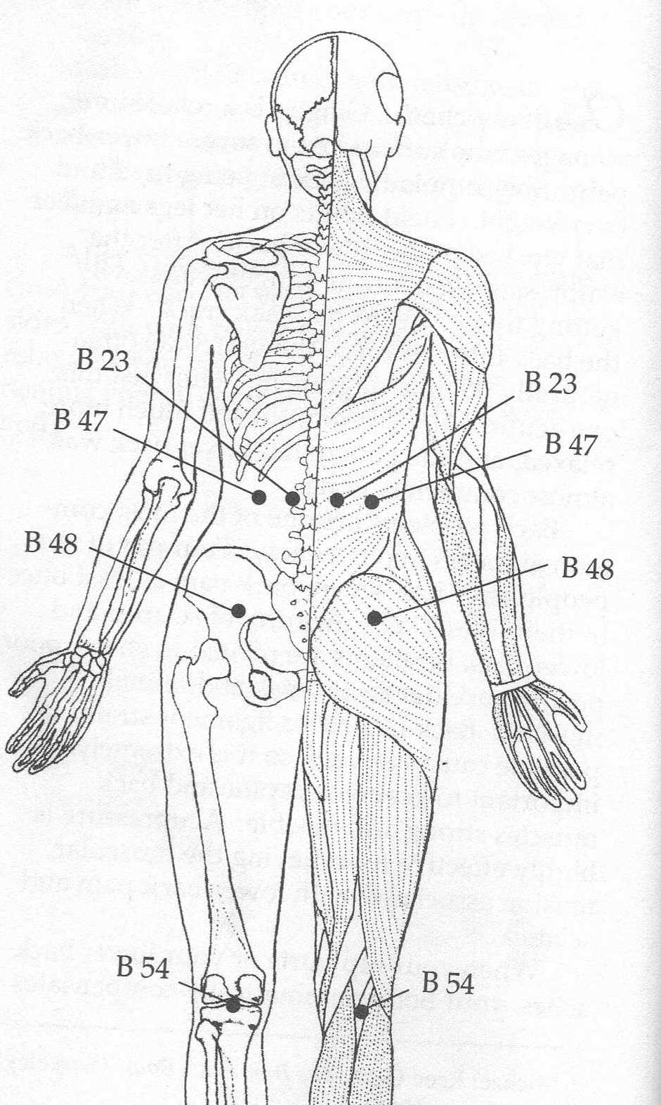 Exercise 220 Exercises And Acupressure Points For